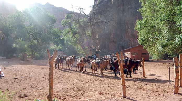 havasu village